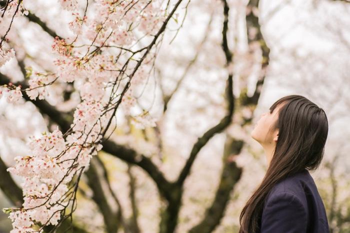 春・桜イメージ写真